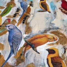 Birds_Detail